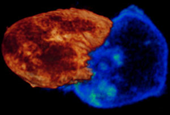 Nobelist's New Microscope Captures Life in Action
