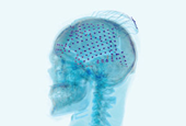 How to Catch Brain Waves in a Net