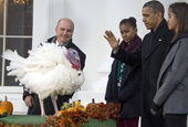 Pampered Turkeys Rest Up in Pricey Hotel Before Presidential Pardon