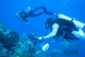 Grand Cayman is the lionfish hunting capital of the world