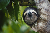 This Sloth Sings for a Good Cause: Saving Americans From Too Much Work