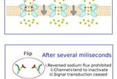 Computer simulations visualize ion flux