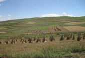 Dizzying heights: Prehistoric farming on the 'roof of the world'