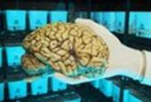 Peeking into the brain's filing system