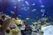 Aquariums 'deliver health benefits'