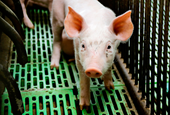 Roving gene lets bacteria resist 'last' antibiotics