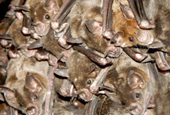 How neurons in bats' brains ensure a safe flight