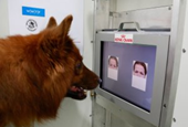 Here's looking at you: Dogs can discriminate emotions of human faces from photos