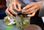 California's cannabis market is expected to soar to $5.1 billion —and it's going to be bigger than