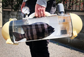 A Sort of Attache Case for Carrying Live Fish