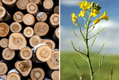 How the often neglected hewers of wood and drawers of water are saving Canada some pain