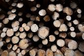 Investors skittish on lumber companies despite record prices
