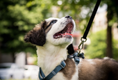 Dogs Are Great for Your Health. But There's a Little-Known Risk of Owning One