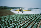 A Mother's Exposure to Pesticides During Pregnancy May Raise Children's Autism Risk