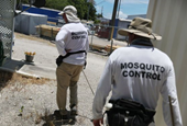 Genetically Modified Mosquitoes Have Come to the U.S. Will They Work?