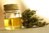 Potentially Tainted Marijuana Sold in Colorado