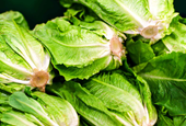 CDC Lifts Advisory Against Certain Romaine Lettuce