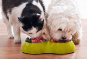 Is Raw or Homemade Food Good for Your Pet?
