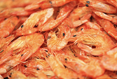 U.S. Children Eating Less Seafood