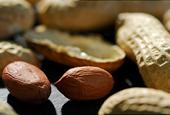 FDA to Assess First Peanut Allergy Drug