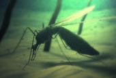 Mosquito, Tick Populations Unchecked Amid COVID-19