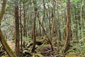 YouTuber's 'suicide forest' video shines light on notorious Japanese woods