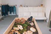 Things Editors Like: T Suggests: A Store With a Mushroom Garden, a New Detroit Hotel and More