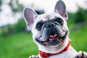 Is Pet Insurance the Benefit That Will Help You Hire?