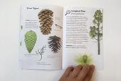 The illustrated treasures of the U.S. Botanic Garden