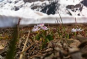 Climate change's frost harms early plant reproduction
