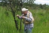 Researchers find potential bugs to eat invasive cogongrass