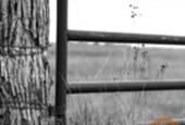 Estate tax could threaten family farms