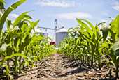 How Does Your Fungicide Move Through the Plant?