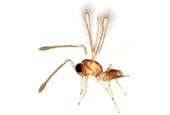 To compare insect brains, make bug brain 'soup'