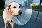 Mistrust may be why some dog owners avoid the vet