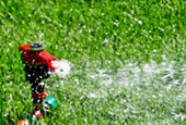 How neighbors can nudge you to skip the sprinkler