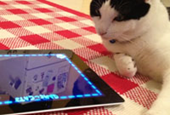Video: What cats can teach you about empathic game design