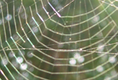 Are Spiders the Key to Biodegradable Computer Chips?