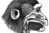 Why can't monkeys speak? Vocal anatomy is not the problem