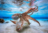 2017 Underwater Photographer of the Year: winning photos announced