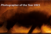 Slideshow: Winners of the Nature TTL Photographer of the Year 2021 competition