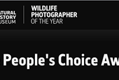 Slideshow: People's Choice Award finalists for Wildlife Photographer of the Year