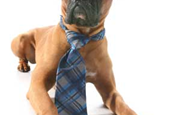8 Great Jobs for Dog Lovers